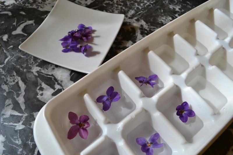 Eiswürfel mit Veilchen